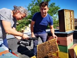 Pszczoły na dachu BCK