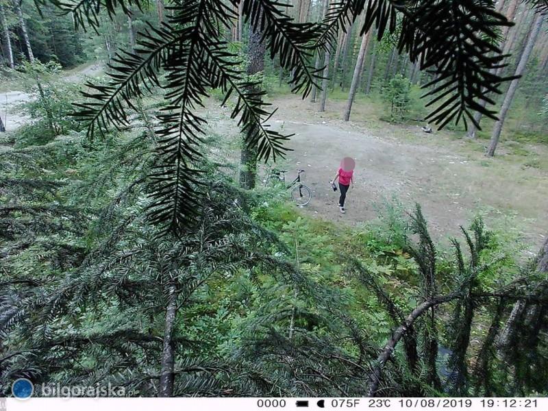 Fotopułapki zarejestrowały zaśmiecających lasy