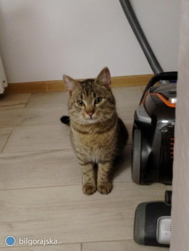 Znaleziony kot. Szukamy właściciela lub domu