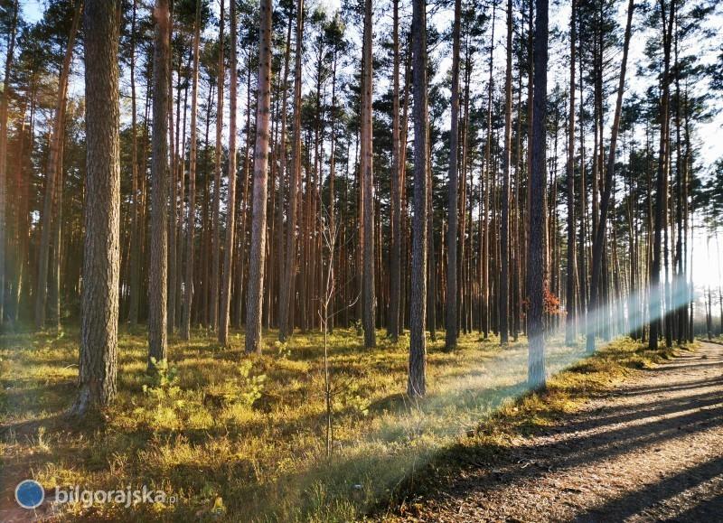 Zakaz wstępu do lasu nadal obowiązuje