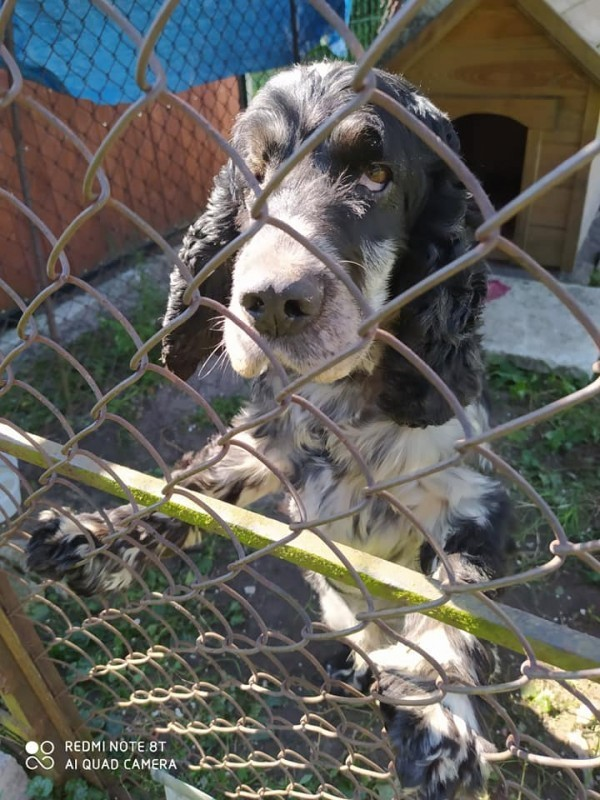 Właściciel psa poszukiwany [AKTUALIZACJA]