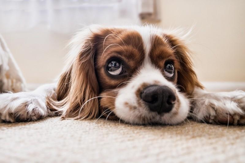 Jak zdrowo karmić psa?