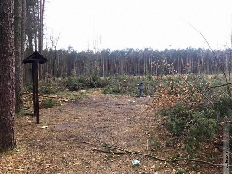 Trwa wycinka drzew wokolicach źródełek. Nadleśnictwo wyjaśnia