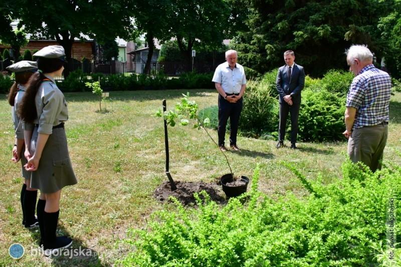 Dąb pamięci posadzony na terenie ZSZiO wBiłgoraju