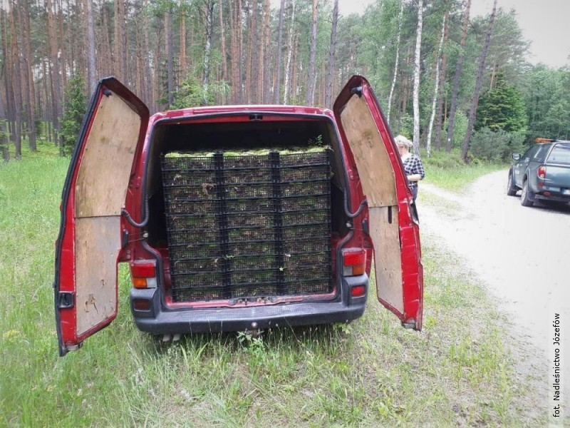 Nielegalni zbieracze mchu wpadli na gorącym uczynku