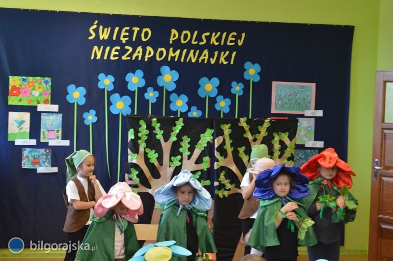 Niezapominajka iinne kwiaty wiosny