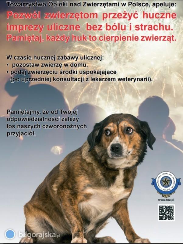 Pomóżmy zwierzętom przetrwać Sylwestra - apel do mieszkańców