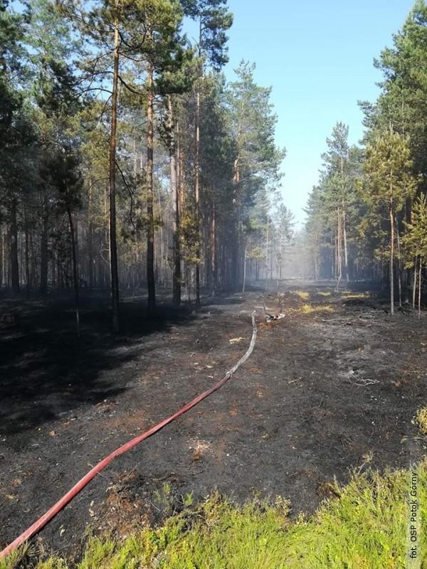 21 jednostek straży walczyło zpożarem