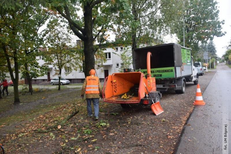 Jesienna pielęgnacja drzew