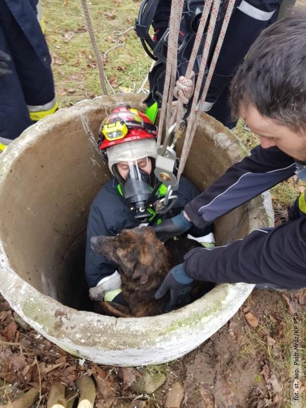 Pies wpadł do studni, uratowali go strażacy