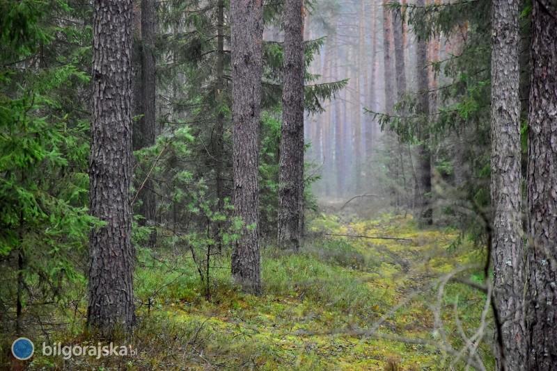 Decyzja dotycząca lasu pomiędzy Biłgorajem aWolą Małą podjęta