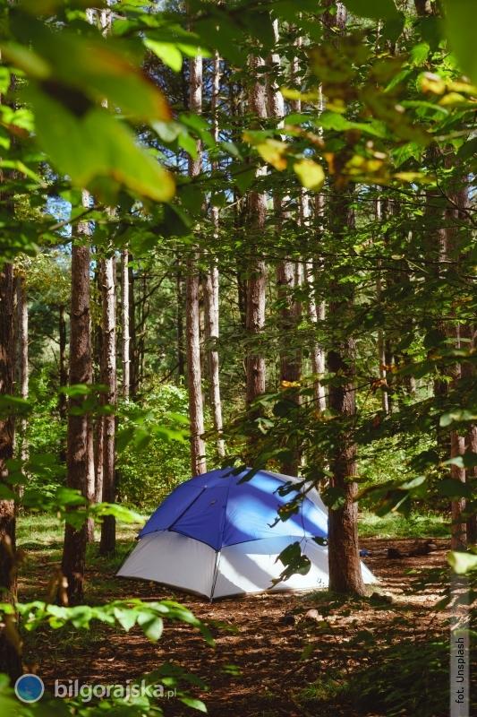 Zanocuj wbiłgorajskim lesie