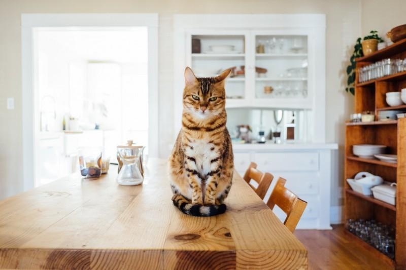 Kuwety dla kotów - jak wybrać najlepszą?