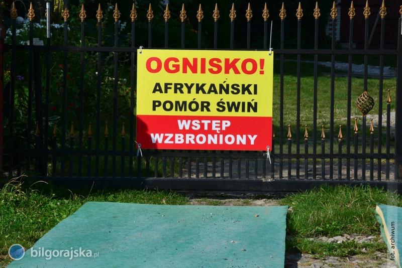 Potwierdzono ognisko ASF wpowiecie biłgorajskim