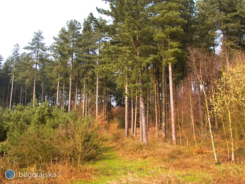 III stopień zagrożenia pożarowego lasów wpowiecie